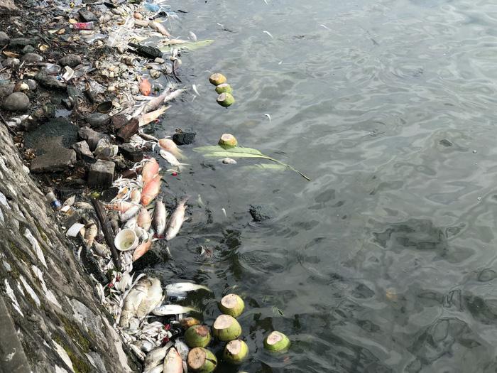 Cá chết nổi trắng hồ Tây do thay đổi thời tiết? - Ảnh 6.