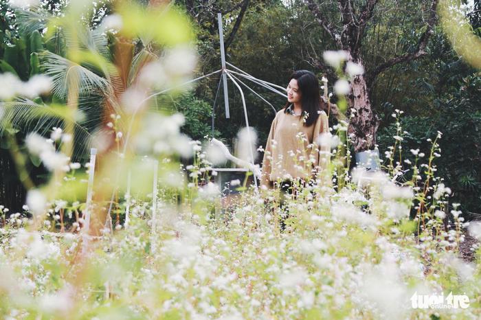 Vườn hoa tam giác mạch  xuất hiện ở Sài Gòn - Ảnh 2.