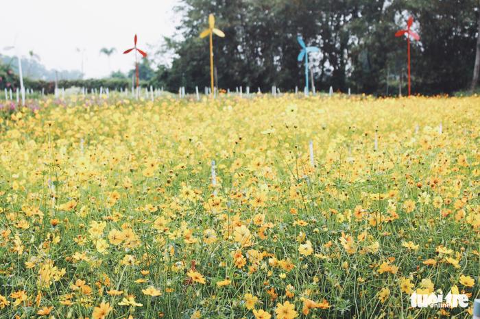Vườn hoa tam giác mạch  xuất hiện ở Sài Gòn - Ảnh 6.