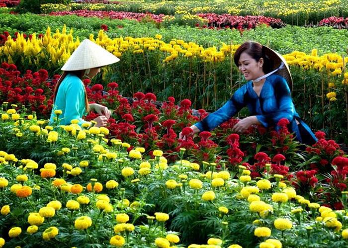 Làng hoa Sa Đéc đón Tết Mậu Tuất - Ảnh 3.