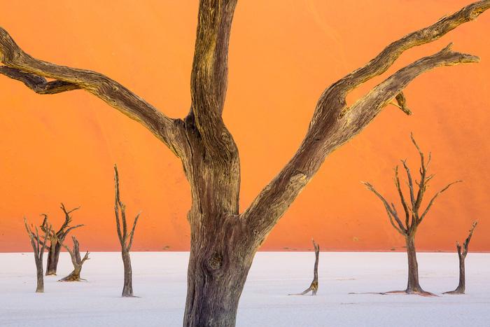 Sắc màu hoang dã Namibia - Ảnh 6.
