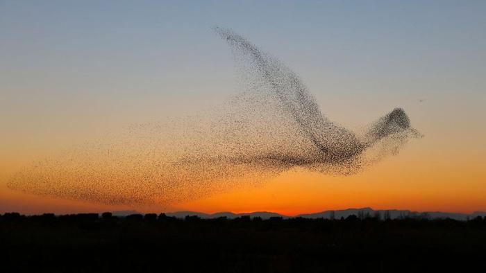 Kinh ngạc vũ điệu chim sáo đá triệu ảnh có một - Ảnh 1.
