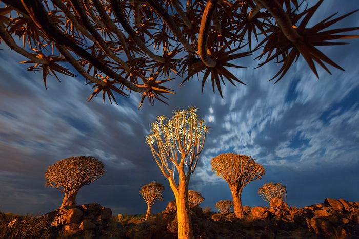 Sắc màu hoang dã Namibia - Ảnh 3.