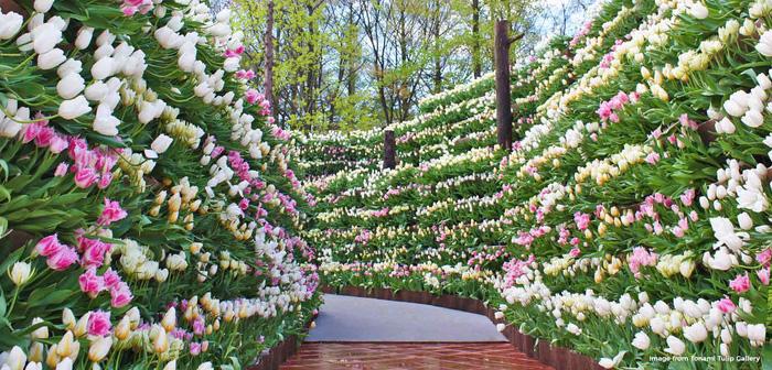 Cung điện hoa tulip rực rỡ ở Nhật Bản - Ảnh 6.
