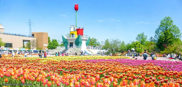 Cung điện hoa tulip rực rỡ ở Nhật Bản - Ảnh 8.