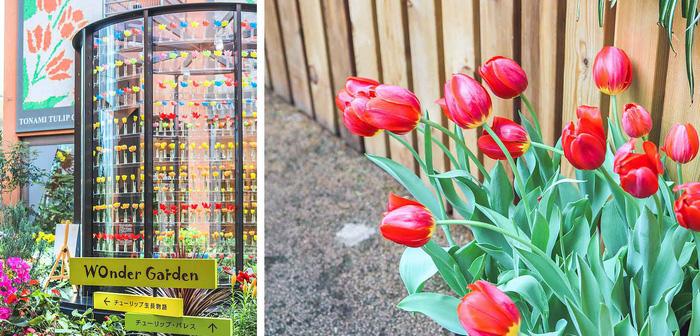Cung điện hoa tulip rực rỡ ở Nhật Bản - Ảnh 1.