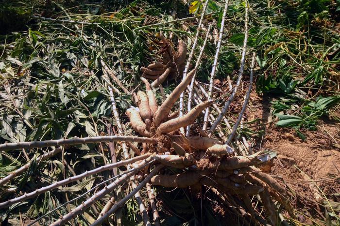 Voi rừng lại ra phá hoại hoa màu ở Đồng Nai - Ảnh 5.
