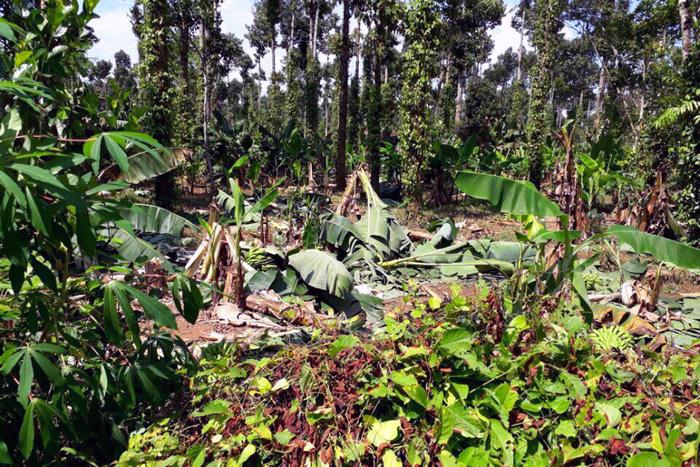 Voi rừng lại ra phá hoại hoa màu ở Đồng Nai - Ảnh 7.