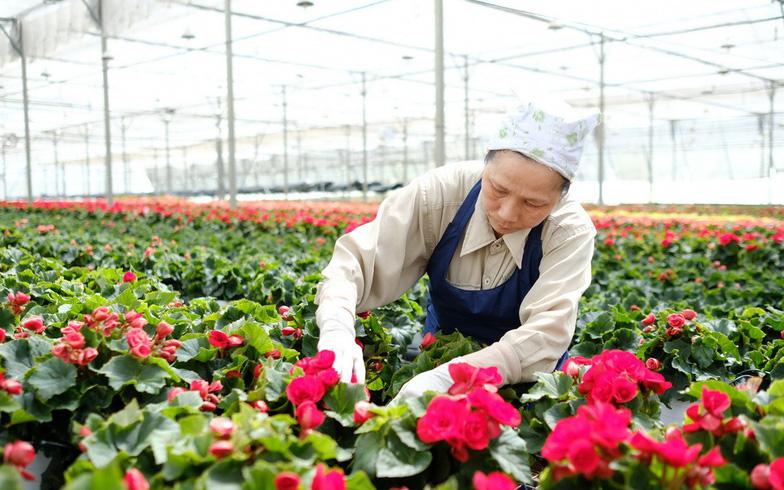 Xuất khẩu quả - rau - hoa hướng tới mục tiêu 10 tỉ USD/năm - Ảnh 1.
