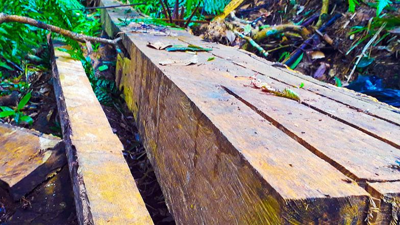 Tan nát rừng đầu nguồn - Kỳ 1: Tàn phá rừng phòng hộ - Ảnh 5.