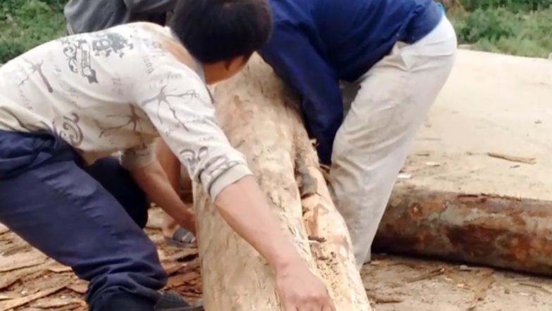 Tan nát rừng đầu nguồn - Kỳ 1: Tàn phá rừng phòng hộ - Ảnh 3.