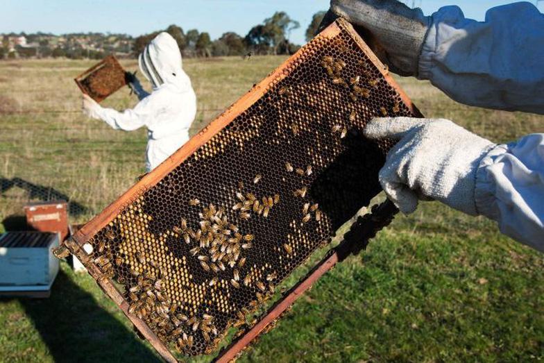 75% mật ong được lấy mẫu trên thế giới bị nhiễm thuốc trừ sâu - Ảnh 1.