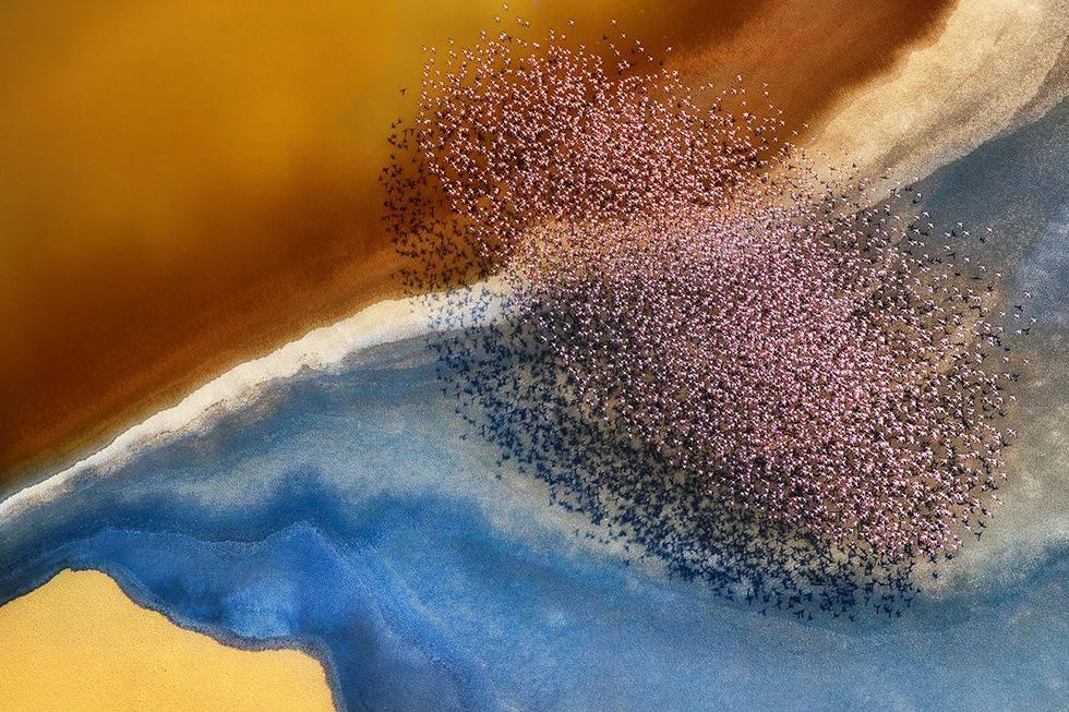 Đẹp ngỡ ngàng ảnh chụp động vật từ trên cao - Ảnh 1.