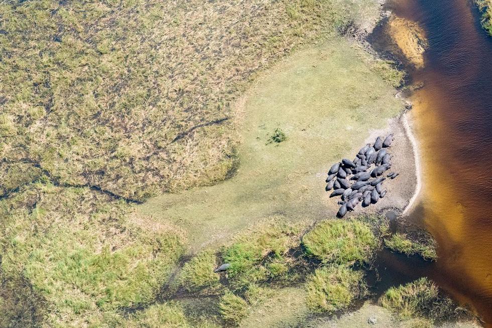 Đẹp ngỡ ngàng ảnh chụp động vật từ trên cao - Ảnh 11.