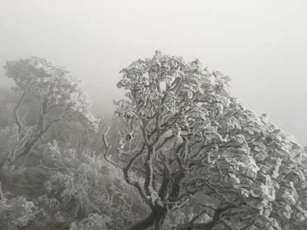 Mưa tuyết phủ trắng đỉnh Fansipan đẹp như cổ tích - Ảnh 3.