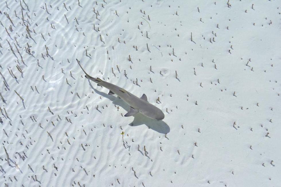 Đẹp ngỡ ngàng ảnh chụp động vật từ trên cao - Ảnh 8.