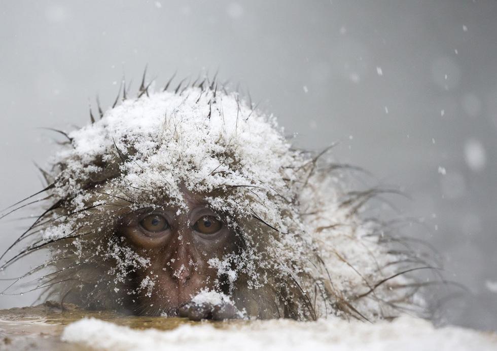 Thế giới trong tuần qua ảnh: tuyết rơi kỷ lục ở Mỹ, nổ ở Afghanistan - Ảnh 3.