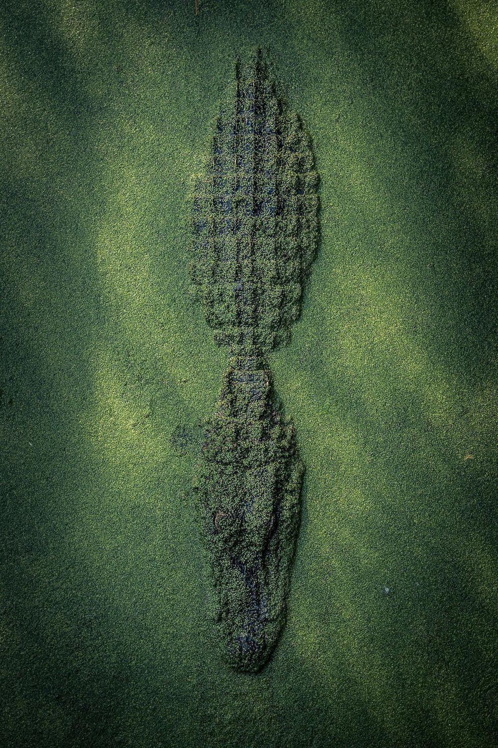 Đẹp ngỡ ngàng ảnh chụp động vật từ trên cao - Ảnh 9.