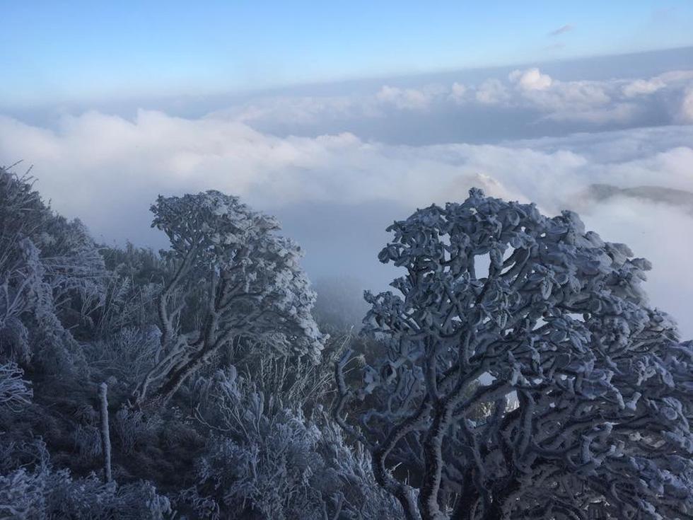 Mưa tuyết phủ trắng đỉnh Fansipan đẹp như cổ tích - Ảnh 5.
