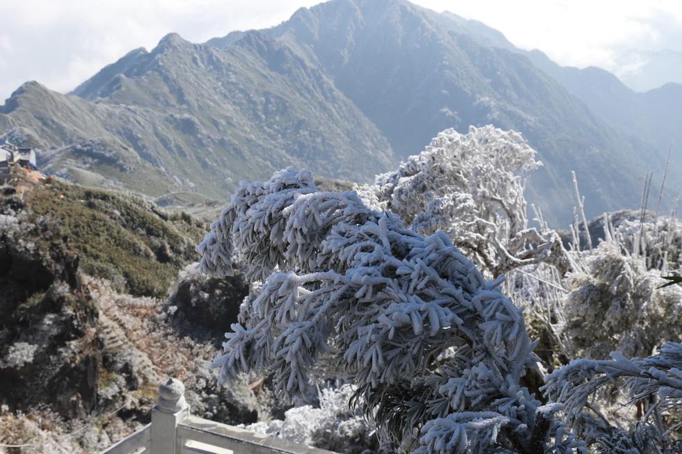 Mưa tuyết phủ trắng đỉnh Fansipan đẹp như cổ tích - Ảnh 30.
