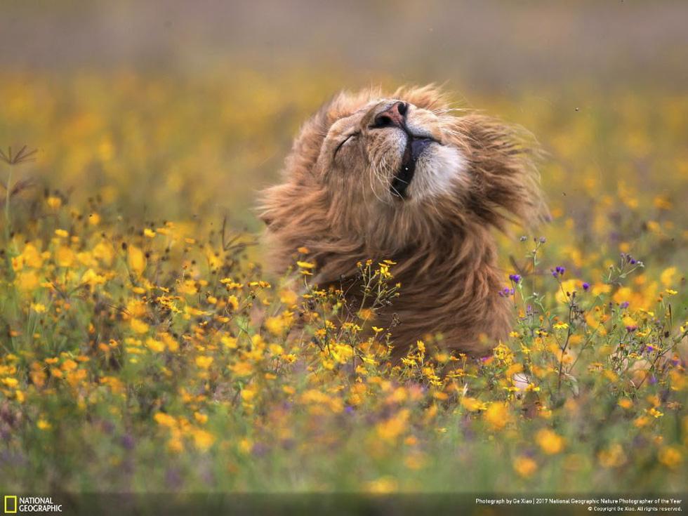Tan chảy với ảnh sư tử trong vườn hoa, hải cẩu làm người mẫu - Ảnh 2.