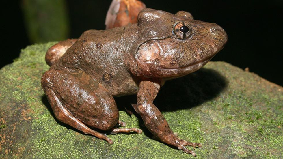Phát hiện 86 loài quý hiếm ở Vườn quốc gia Bù Gia Mập - Ảnh 3.