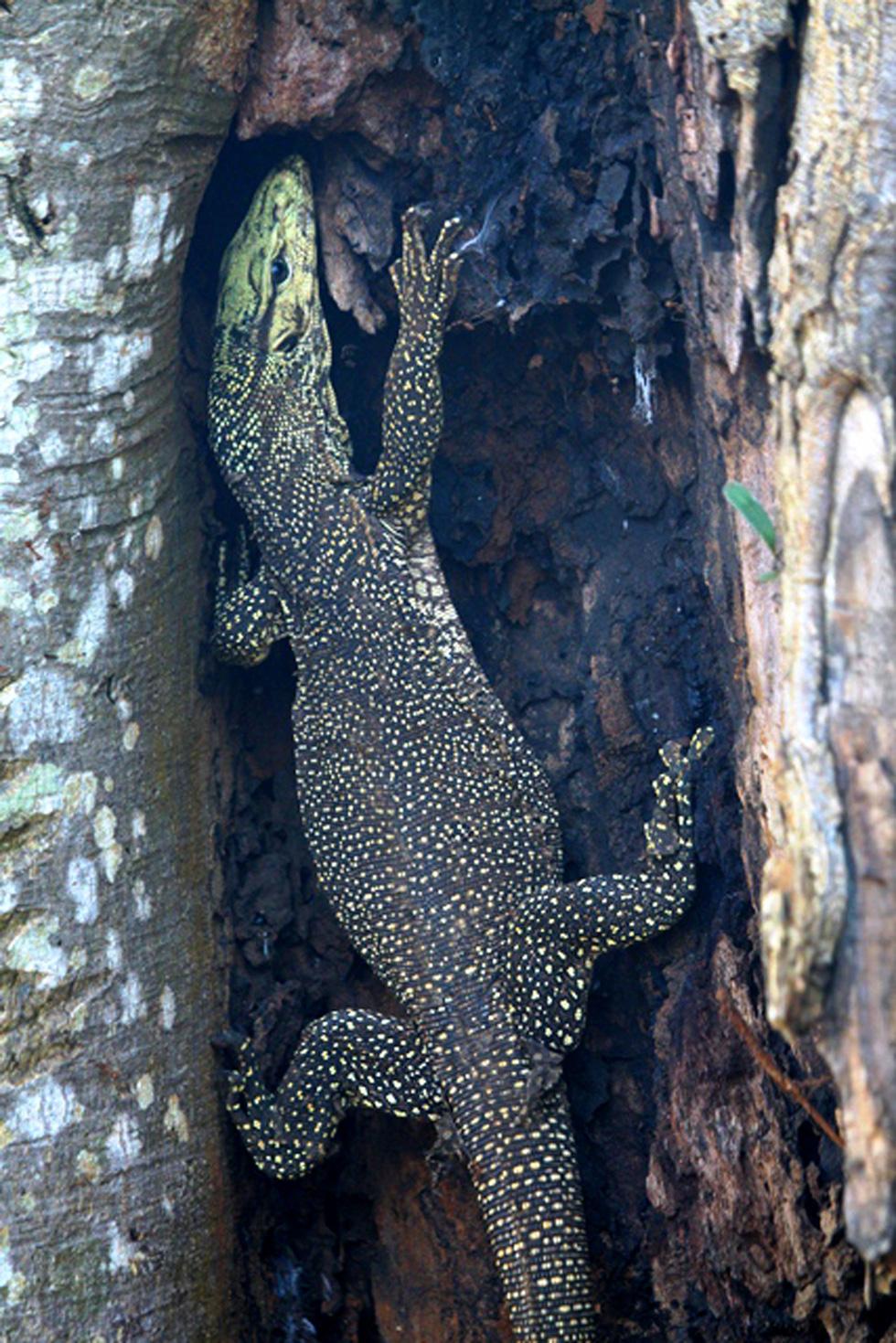 Phát hiện 86 loài quý hiếm ở Vườn quốc gia Bù Gia Mập - Ảnh 2.