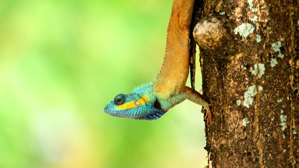 Phát hiện 86 loài quý hiếm ở Vườn quốc gia Bù Gia Mập - Ảnh 5.