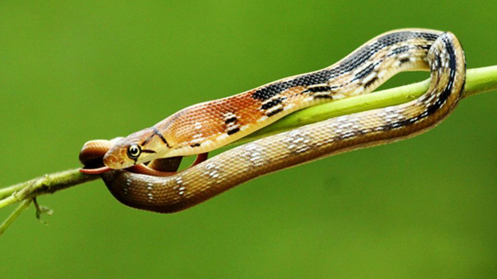 Phát hiện 86 loài quý hiếm ở Vườn quốc gia Bù Gia Mập - Ảnh 8.