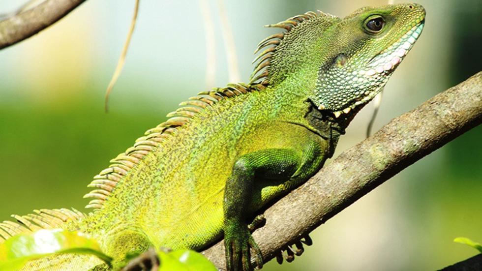 Phát hiện 86 loài quý hiếm ở Vườn quốc gia Bù Gia Mập - Ảnh 6.