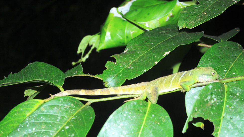 Phát hiện 86 loài quý hiếm ở Vườn quốc gia Bù Gia Mập - Ảnh 4.
