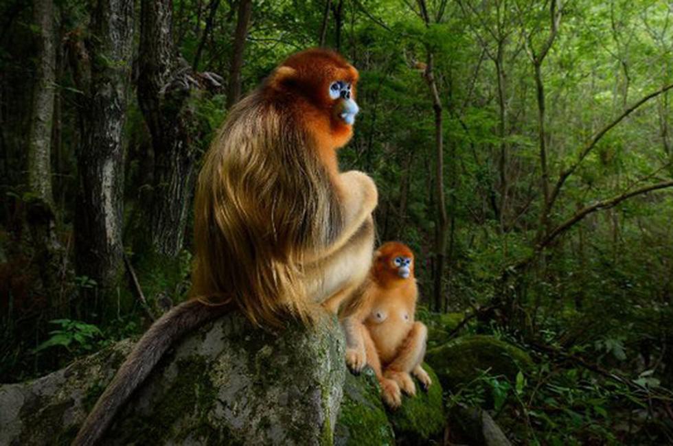 Ảnh động vật hoang dã tuyệt đẹp năm 2018 - Ảnh 1.