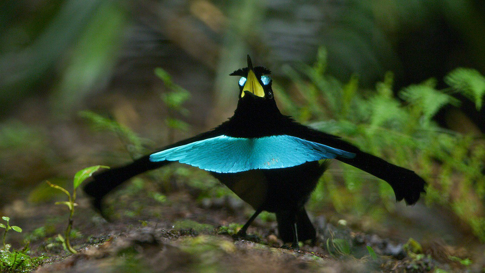 Kỳ dị 10 loài chim như người ngoài hành tinh - Ảnh 3.