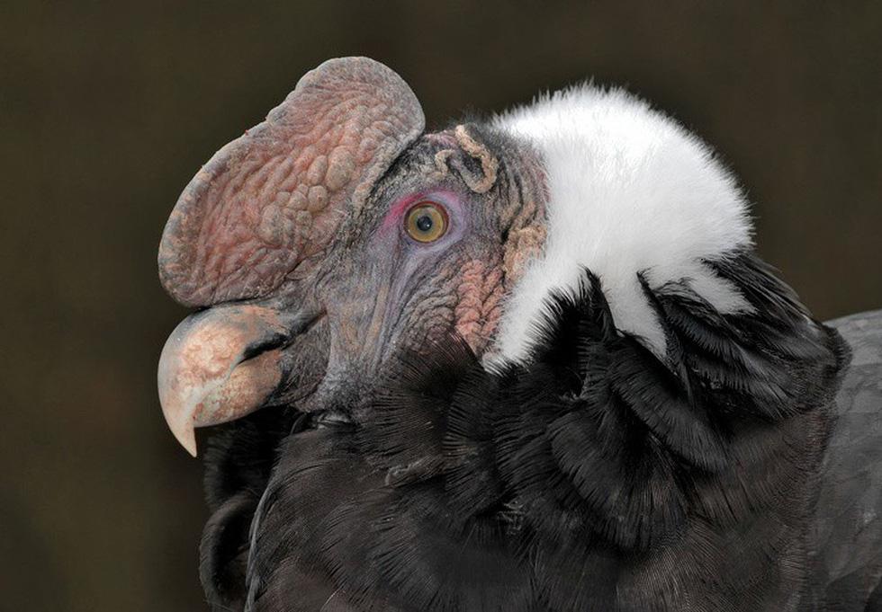 Kỳ dị 10 loài chim như người ngoài hành tinh - Ảnh 9.
