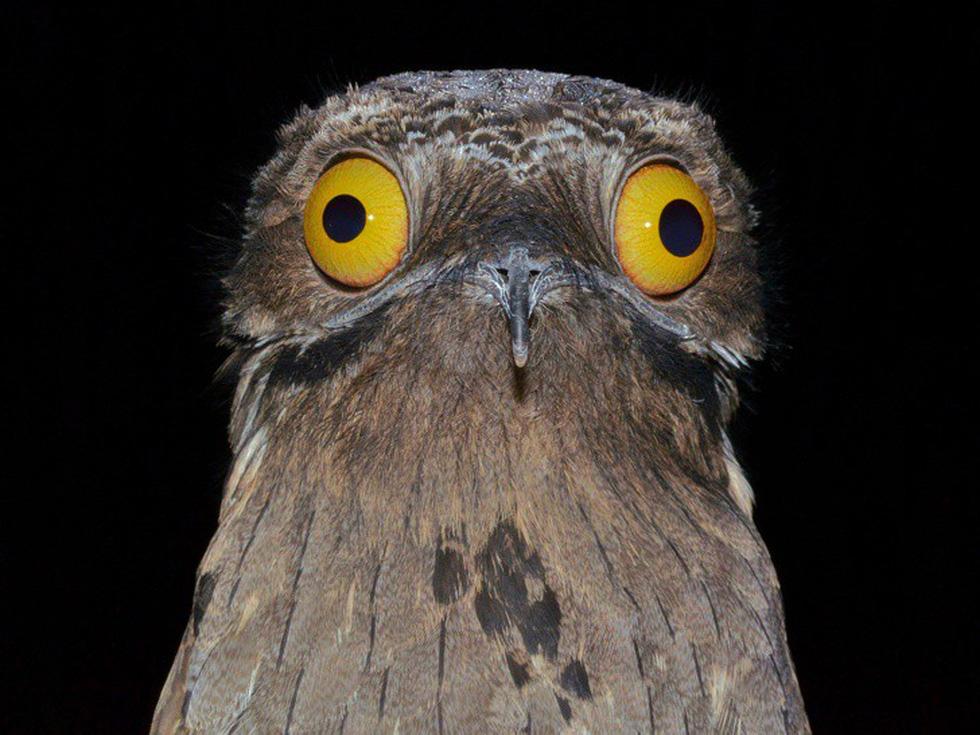 Kỳ dị 10 loài chim như người ngoài hành tinh - Ảnh 7.