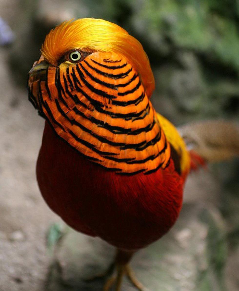 Kỳ dị 10 loài chim như người ngoài hành tinh - Ảnh 4.