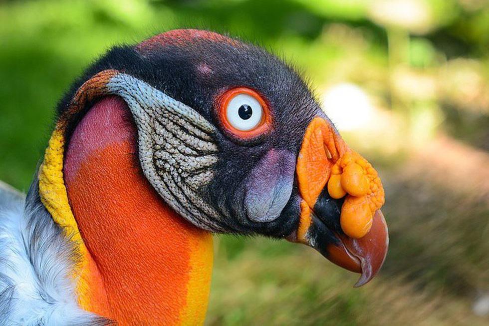 Kỳ dị 10 loài chim như người ngoài hành tinh - Ảnh 1.