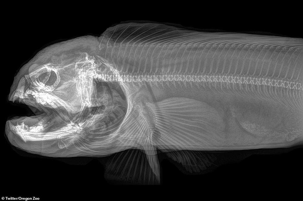Ảnh động vật ngộ nghĩnh dưới kính X-quang - Ảnh 10.