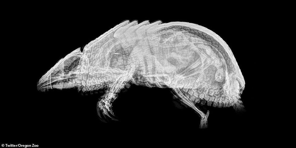 Ảnh động vật ngộ nghĩnh dưới kính X-quang - Ảnh 11.