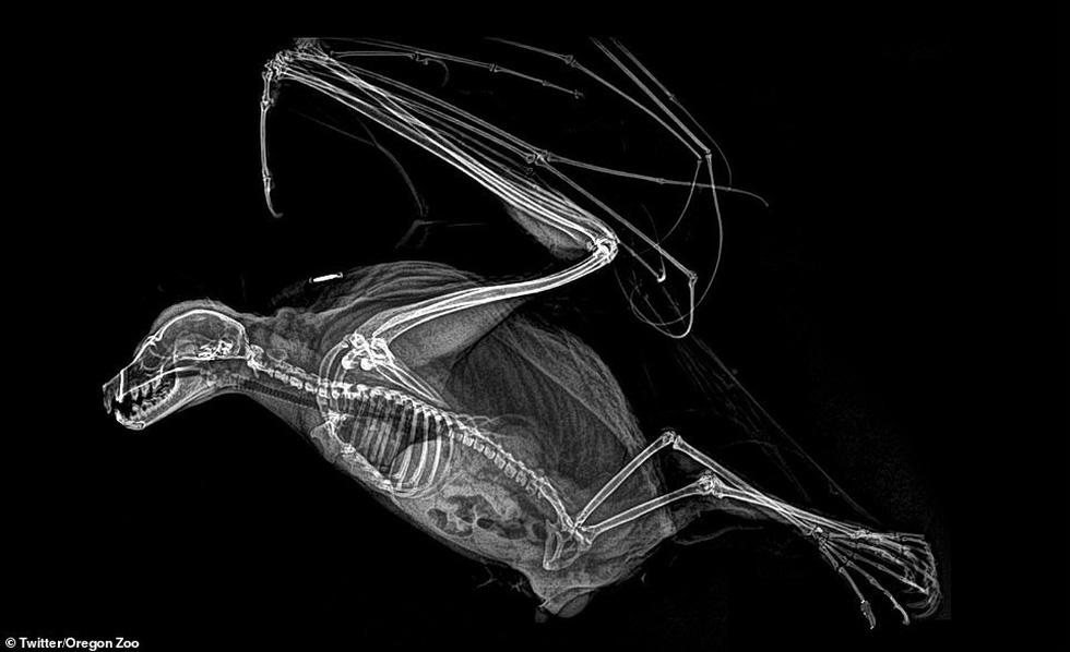 Ảnh động vật ngộ nghĩnh dưới kính X-quang - Ảnh 1.