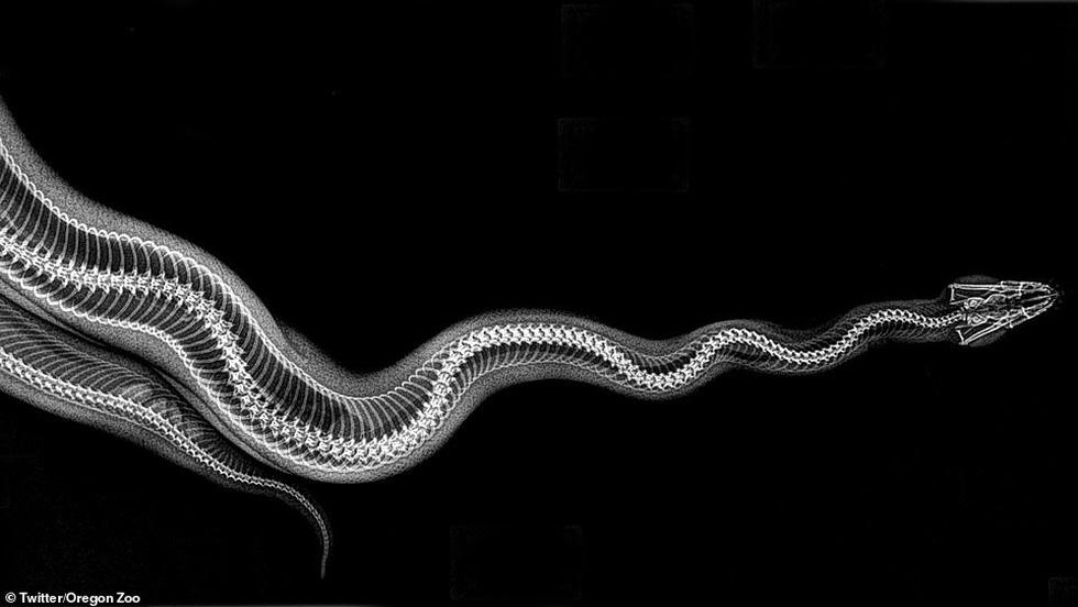 Ảnh động vật ngộ nghĩnh dưới kính X-quang - Ảnh 2.