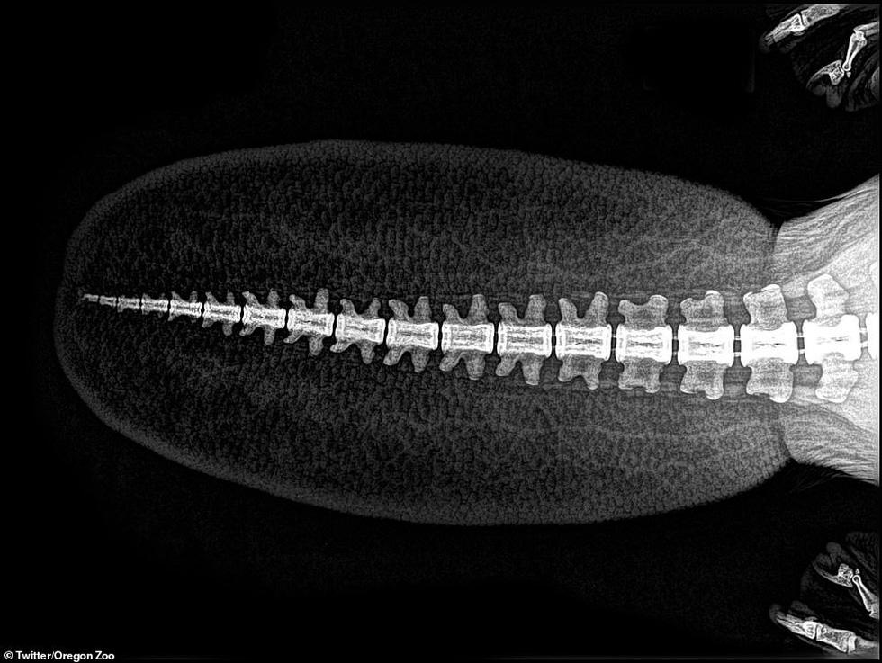 Ảnh động vật ngộ nghĩnh dưới kính X-quang - Ảnh 3.