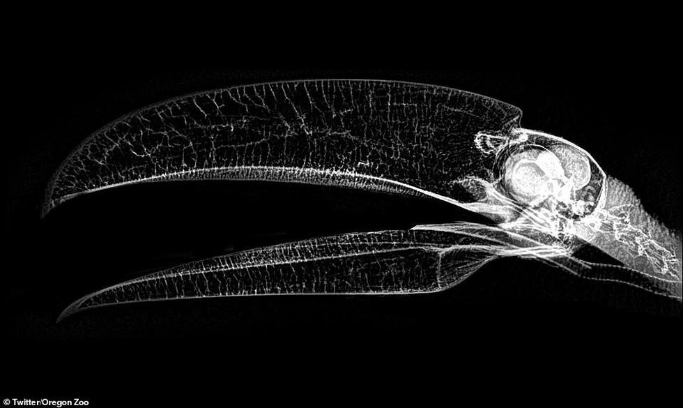 Ảnh động vật ngộ nghĩnh dưới kính X-quang - Ảnh 4.