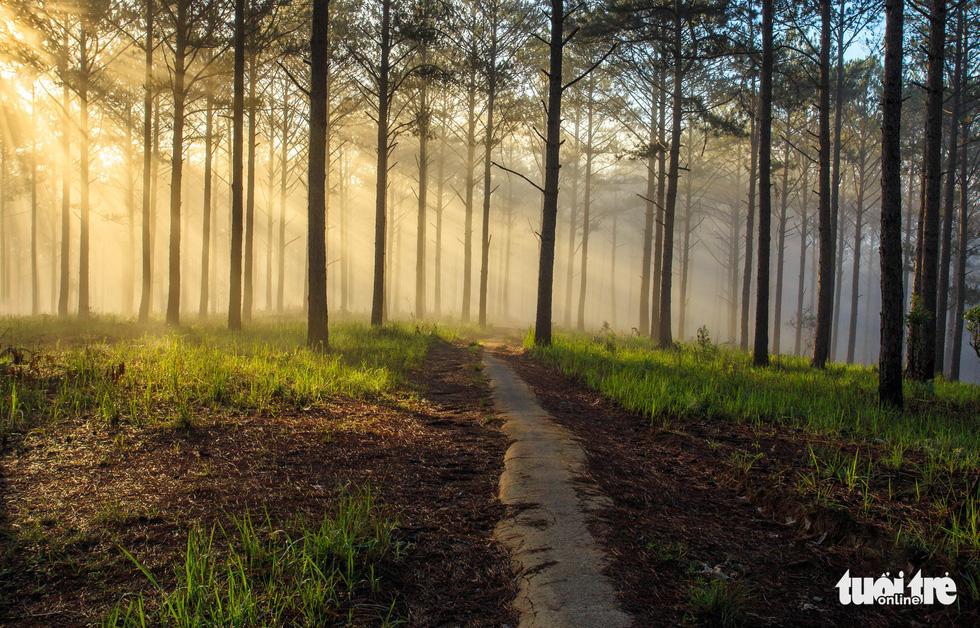 Bộ ảnh Đà Lạt mơ màng trong mùa nắng lạnh đẹp nhất năm - Ảnh 6.