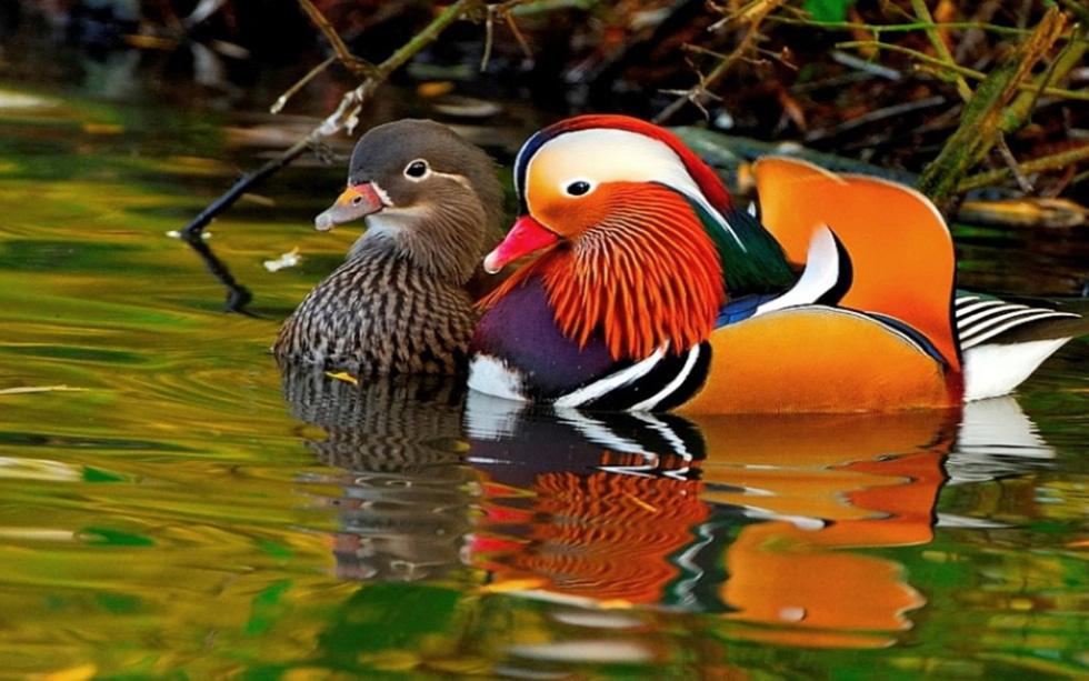 Kỳ dị 10 loài chim như người ngoài hành tinh - Ảnh 10.