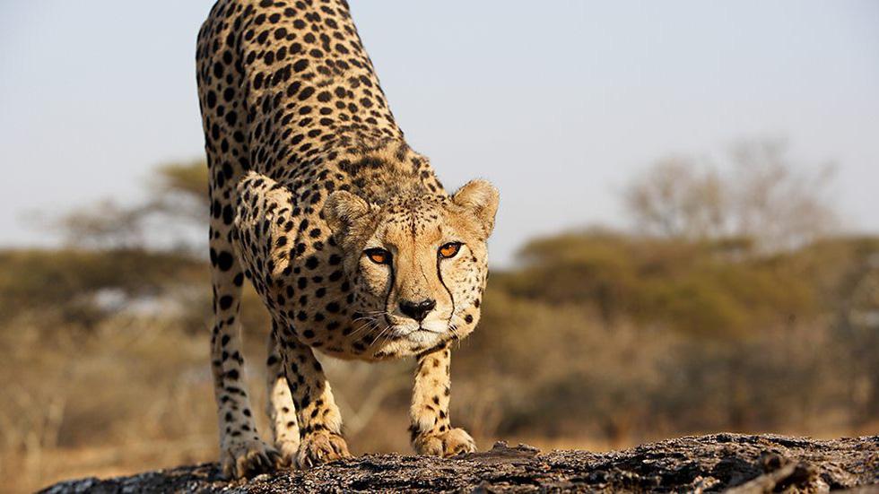 Vua săn mồi đáng sợ nhất trên mặt đất - Ảnh 4.