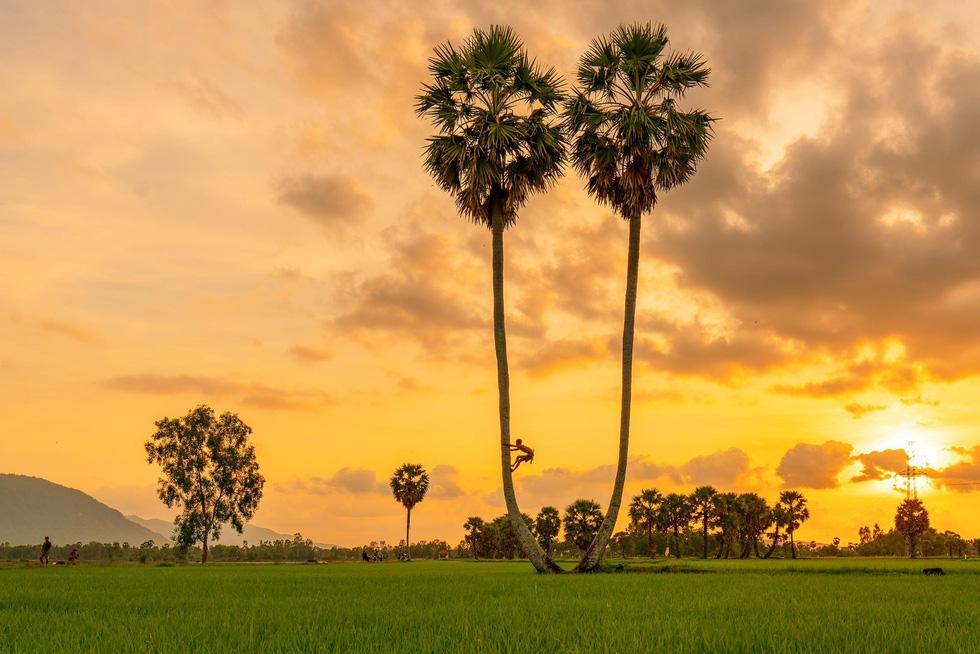 Đến xứ sở cây thốt nốt Tịnh Biên mùa nước nổi - Ảnh 6.