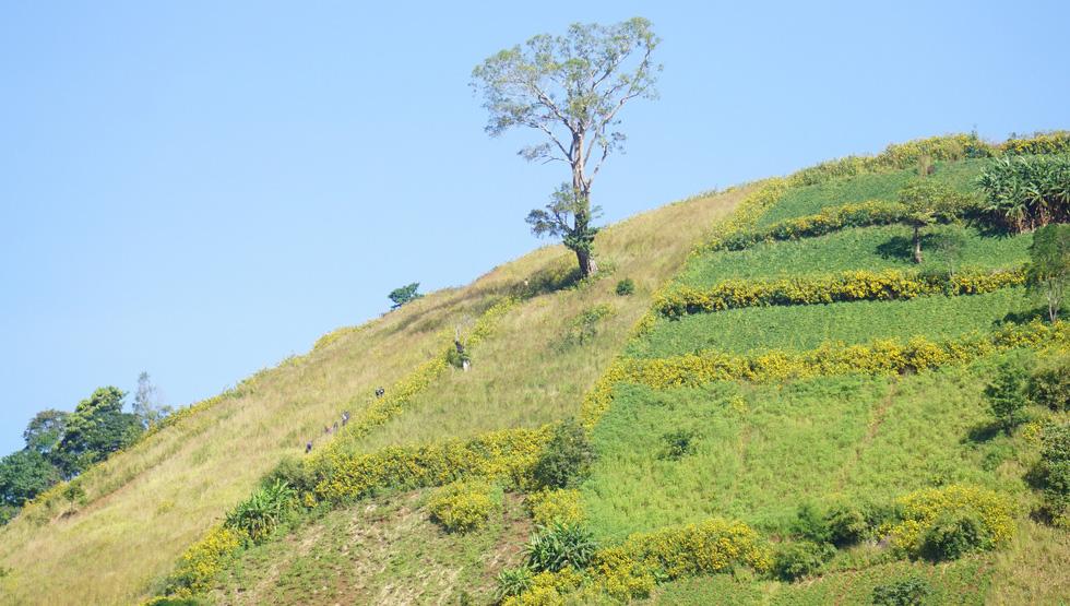 Lễ hội Hoa dã quỳ khai mạc trên núi lửa Chư Đăng Ya - Ảnh 4.