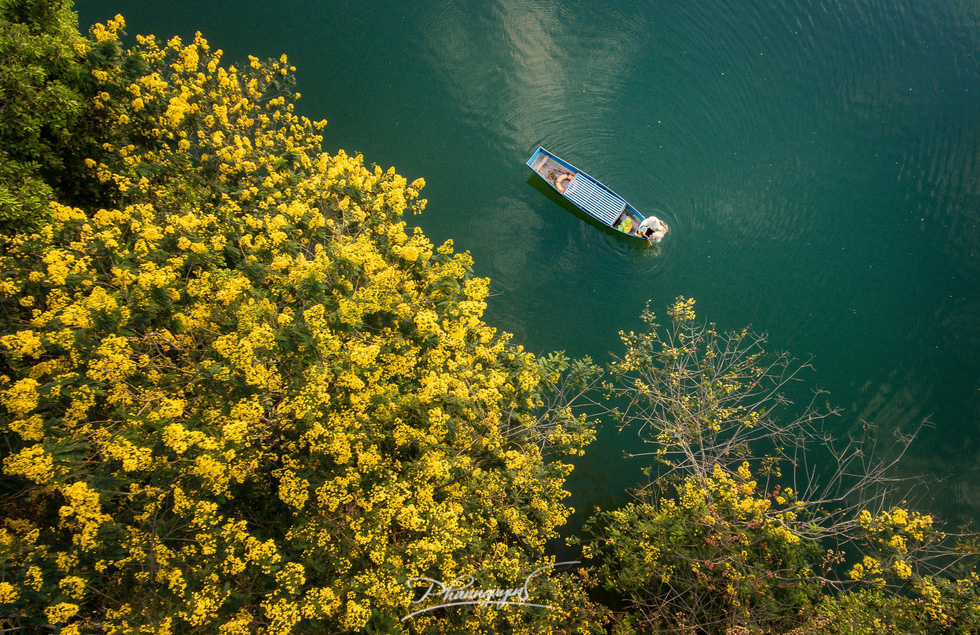 Hoa muồng nở vàng rực phố núi Gia Lai - Ảnh 2.