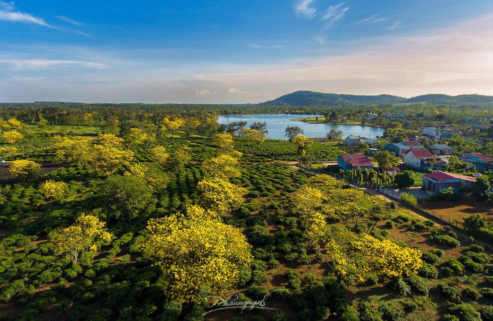 Hoa muồng nở vàng rực phố núi Gia Lai - Ảnh 4.